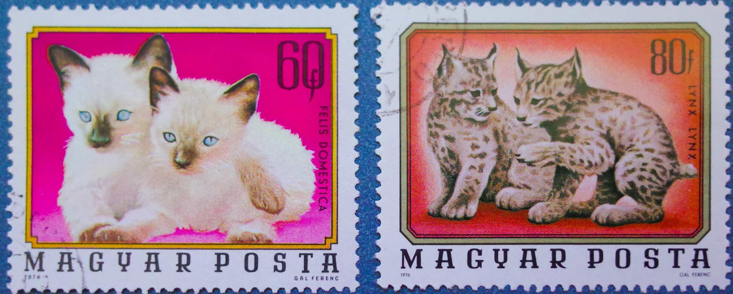 Felis Domestica and Lynx
